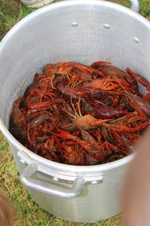 Crawfish 025