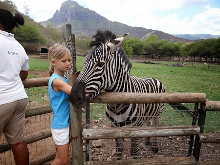 02. Mangaie o zebra la Casela Park - Mauritius.JPG