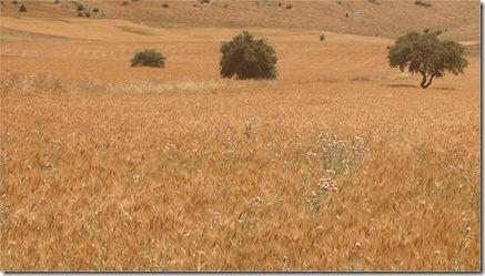 cereal turqua2