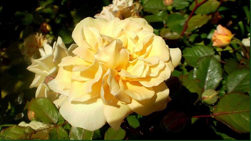 humedad,rosas 019
