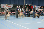 20130510-Bullmastiff-Worldcup-0645.jpg