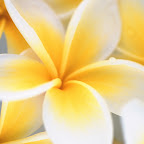 angkorsite_flower_1 (108).jpg