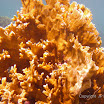 Buck Island Reef - IMGP1122.jpg