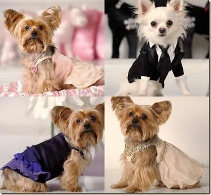 ropa para perros en zaragoza--
