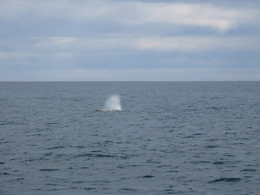 "Nobody is permitted to say,""Thar she blows!"" But, you look for the upward spray. The sperm whales in these waters at this time were all males."