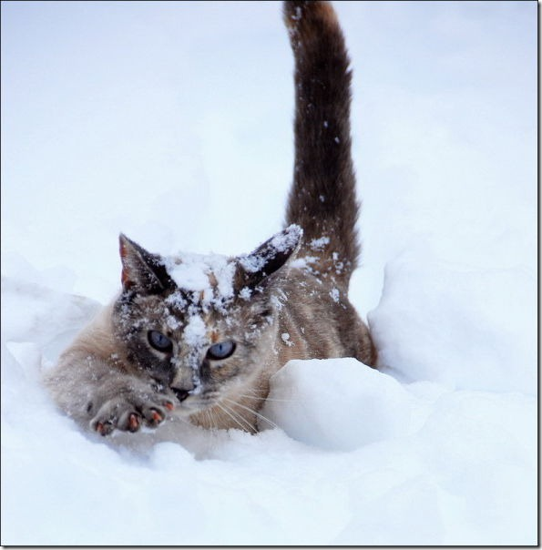 cats-play-snow-21