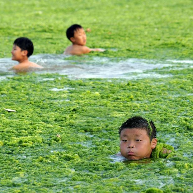 chinese-algae16
