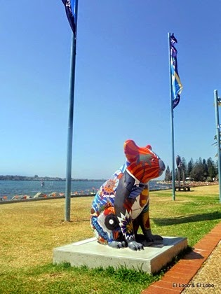 Painted Koalas of Port Macquarie (3)