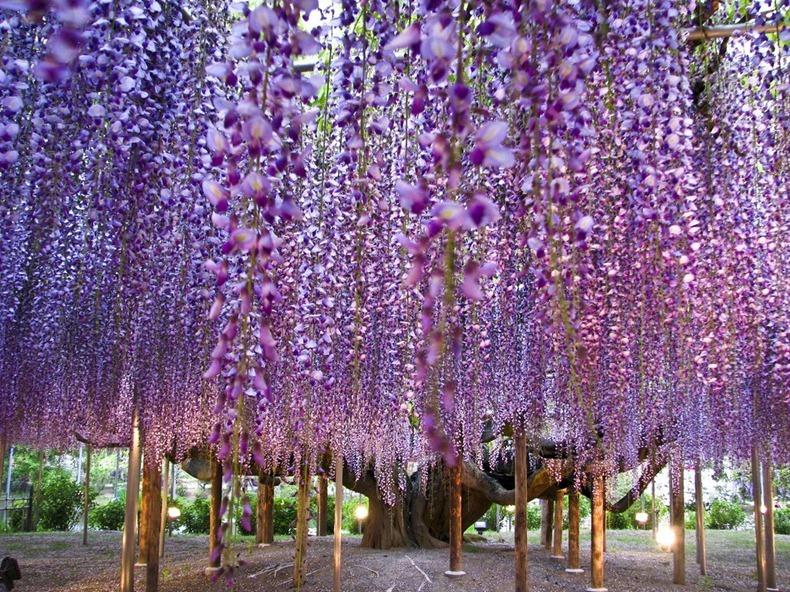 Ashikaga Flower Park, Japan | Amusing Planet