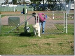 Jackson in Dogpark (2)