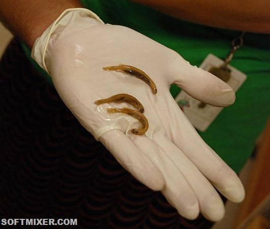12-candiru-extracted