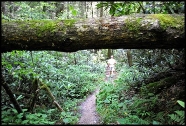 03d - Rock Bridge Nature Trail - down through the Rhododendron