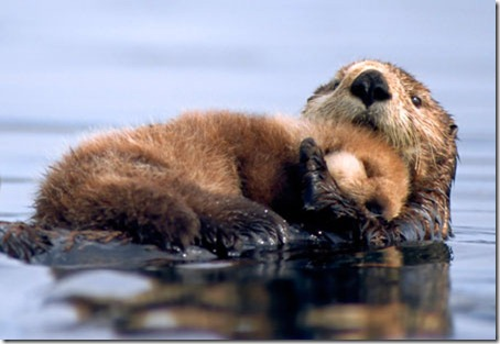 sea otter- bing