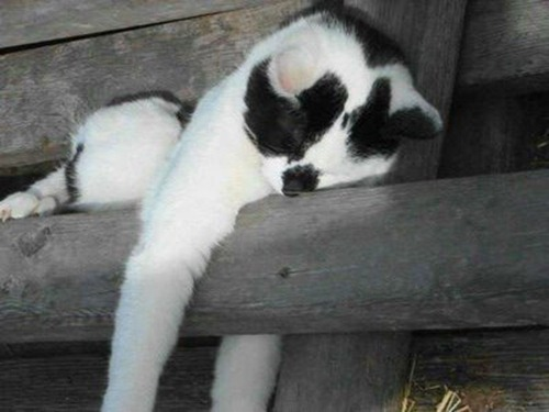 Cats Will Sleep Anywhere 27