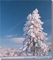paisajes nevados (18)