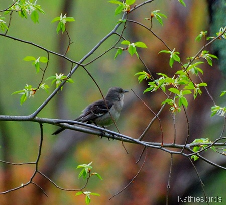 9. mockingbird-kab