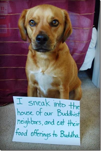 dogs-dirty-secrets-8