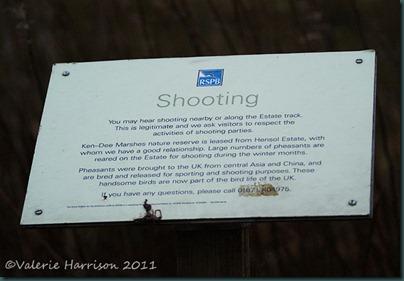 16-shooting