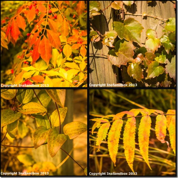 fall collage 2
