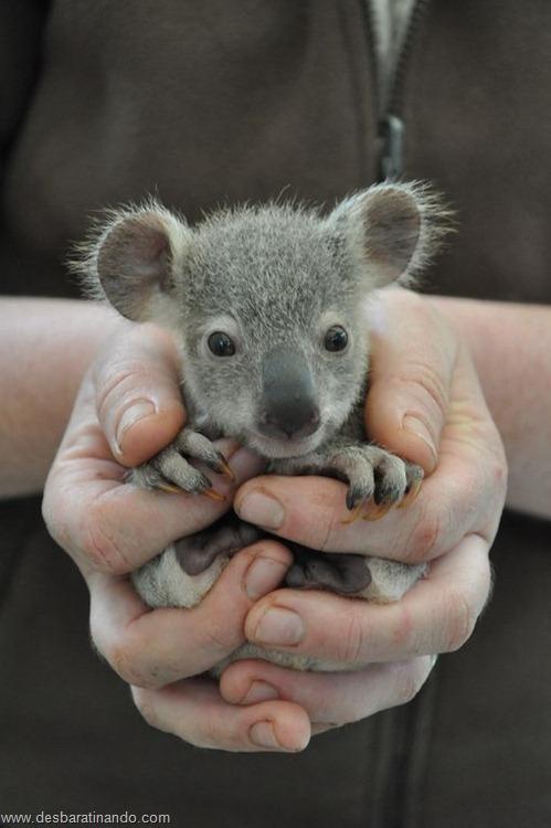 filhotes recem nascidos zoo zoologico desbaratinando animais lindos fofos  (37)