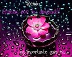Flor de la Amistad_800