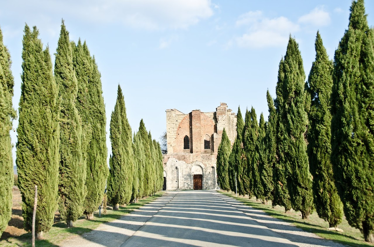 Cypress trees on the path to the Abbey of San Galgano
