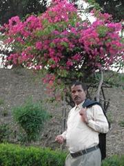 الدكتور السيد عبدالودود الهاشمي