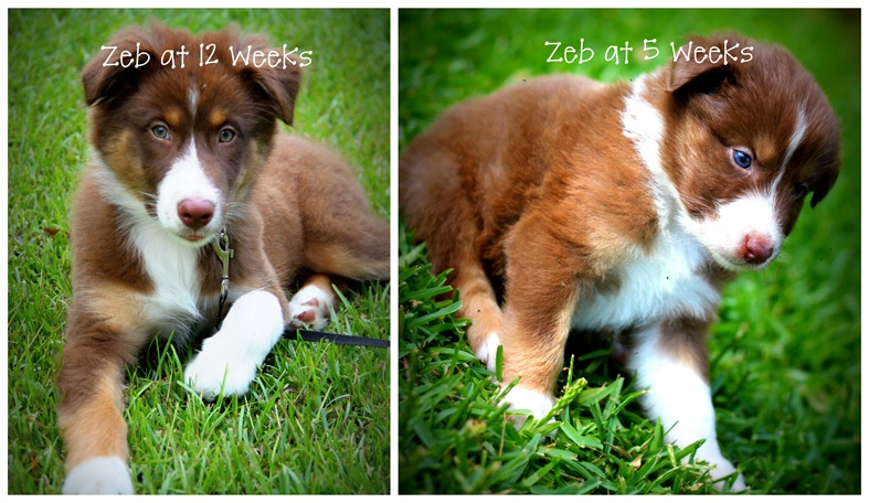 Zeb at 12 Weeks