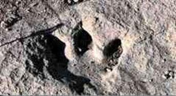 pegada-homem-pré-histórico