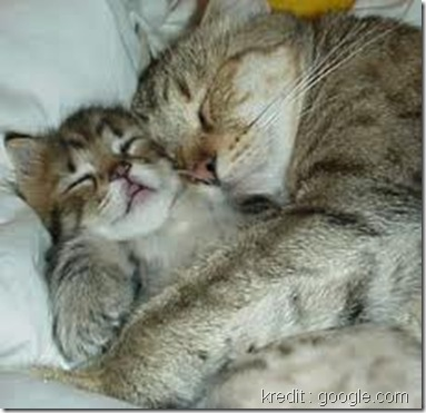 gambar suami isteri tidur bersama