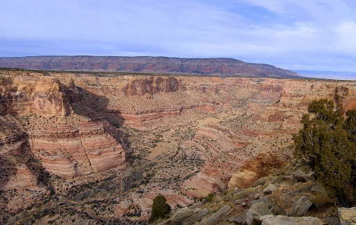 View up Calf Canyon