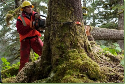 sarah logging