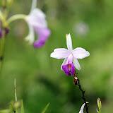 Flowers at Waiseli Rainforest Preserve - Savusavu, Fiji