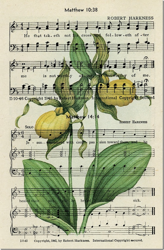 Ladyslipper on page