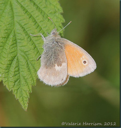 small-heath