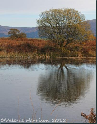 37-reflected-tree