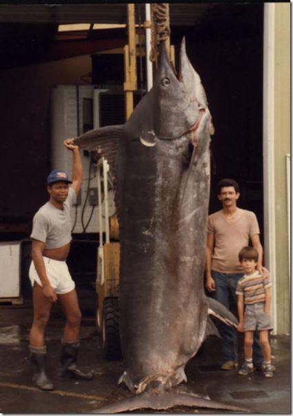 big-fish-fishing-3