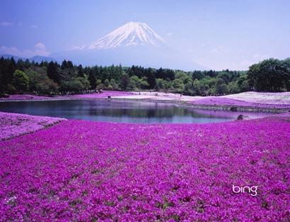 Flores-lilas