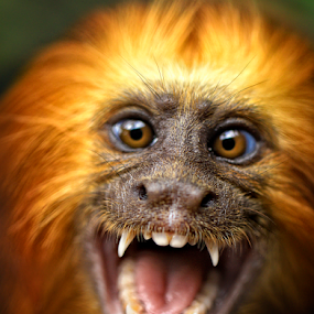 Terrify by Roy Ardy - Animals Other Mammals ( animals, other mammals, monkey, , Free, Freedom, Inspire, Inspiring, Inspirational, Emotion )