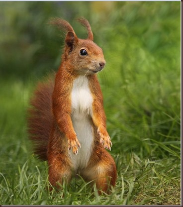 Amazing Animals Pictures Squirell (10)