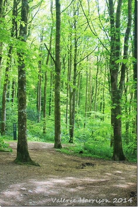 1-Cally-Woods