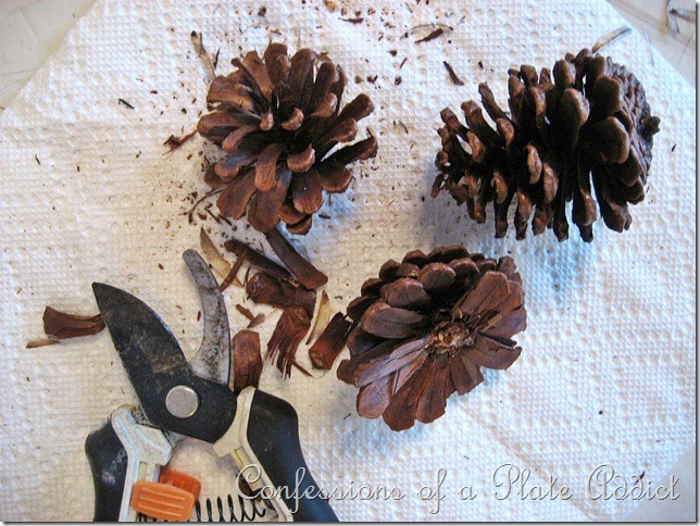 CONFESSIONS OF A PLATE ADDICT Pinecone Roses