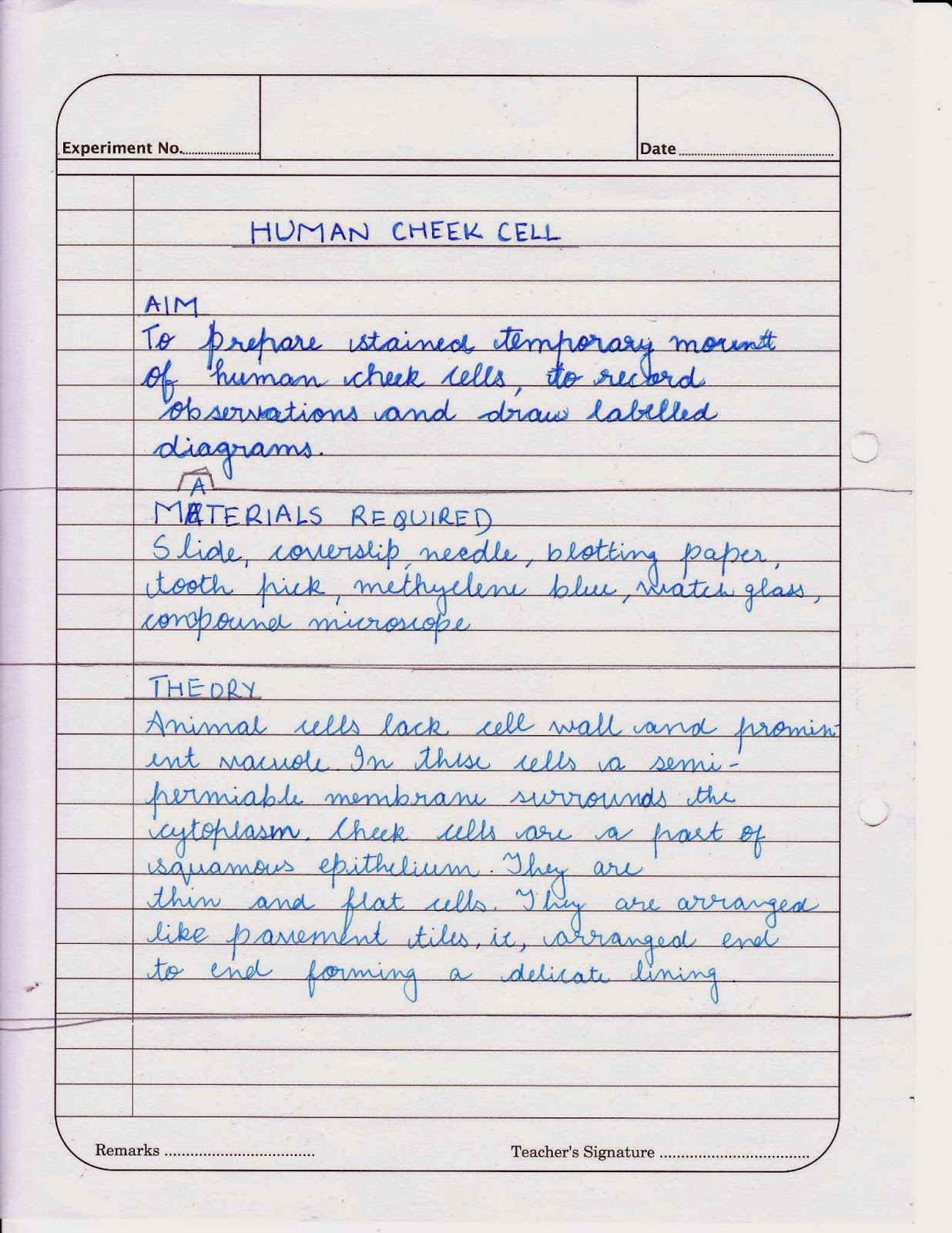 difference between onion cell and cheek cell