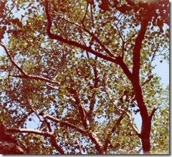 SueReno_Bo Tree 2