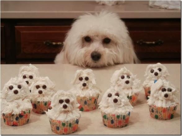 perfect-cupcake-heaven-008