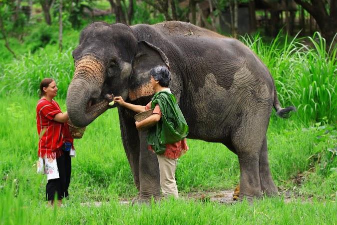 Imagini Thailanda: hranind un elefant, Patara, Thailanda
