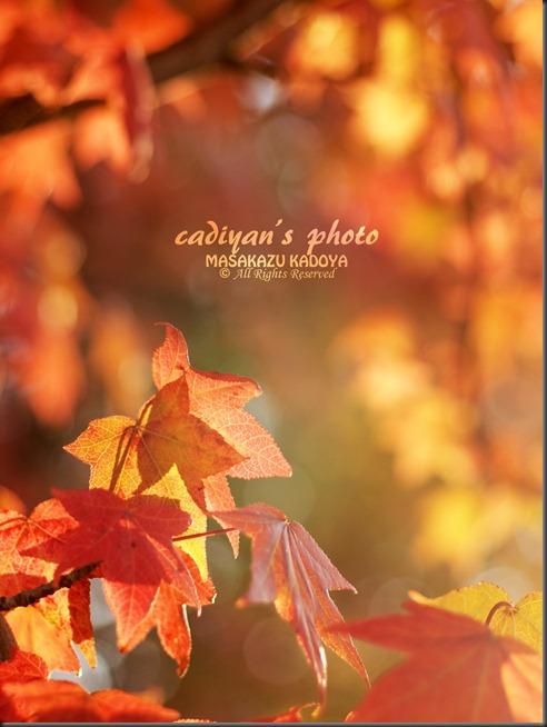E-PL1_2012-10-22_005