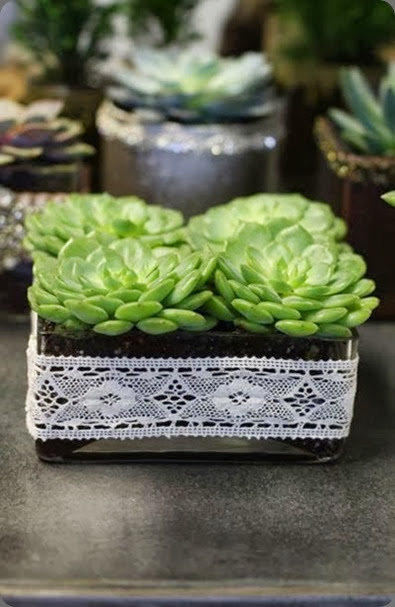 succulents holidaypop-up11 JL Designs