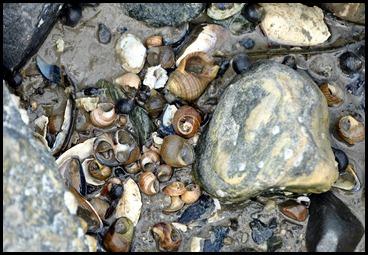 09 - sea shells
