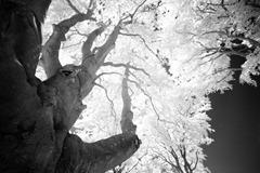 The-Tree-9